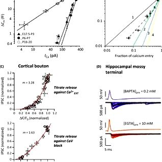 Controlling synaptic strength diversity in hippocampal neurons Behavior and also