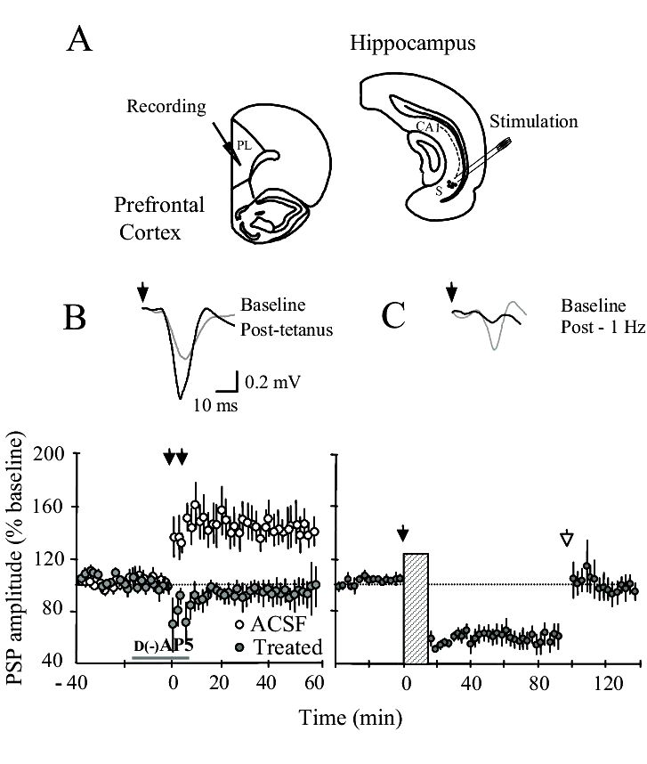 Insights into hippocampal circuitry and performance from studies of synaptic plasticity yourself too thin