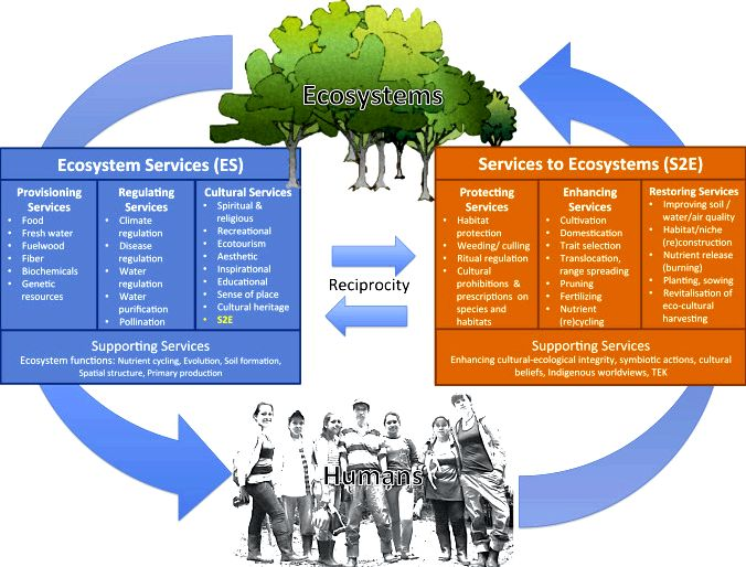 Services done by the ecosystem: forest remains influence farming cultures' title='Services done by the ecosystem: forest remains influence farming cultures' /></div> <p>Resourse: https://link.springer.com/article/10.1023/</p> <div style='text-align:center;