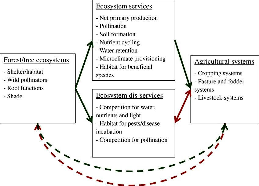 Services done by the ecosystem: forest remains influence farming cultures' title='Services done by the ecosystem: forest remains influence farming cultures' /></div> <h3>Why Biodiversity Is Good For The Economy</h3> <p><center><iframe width='560